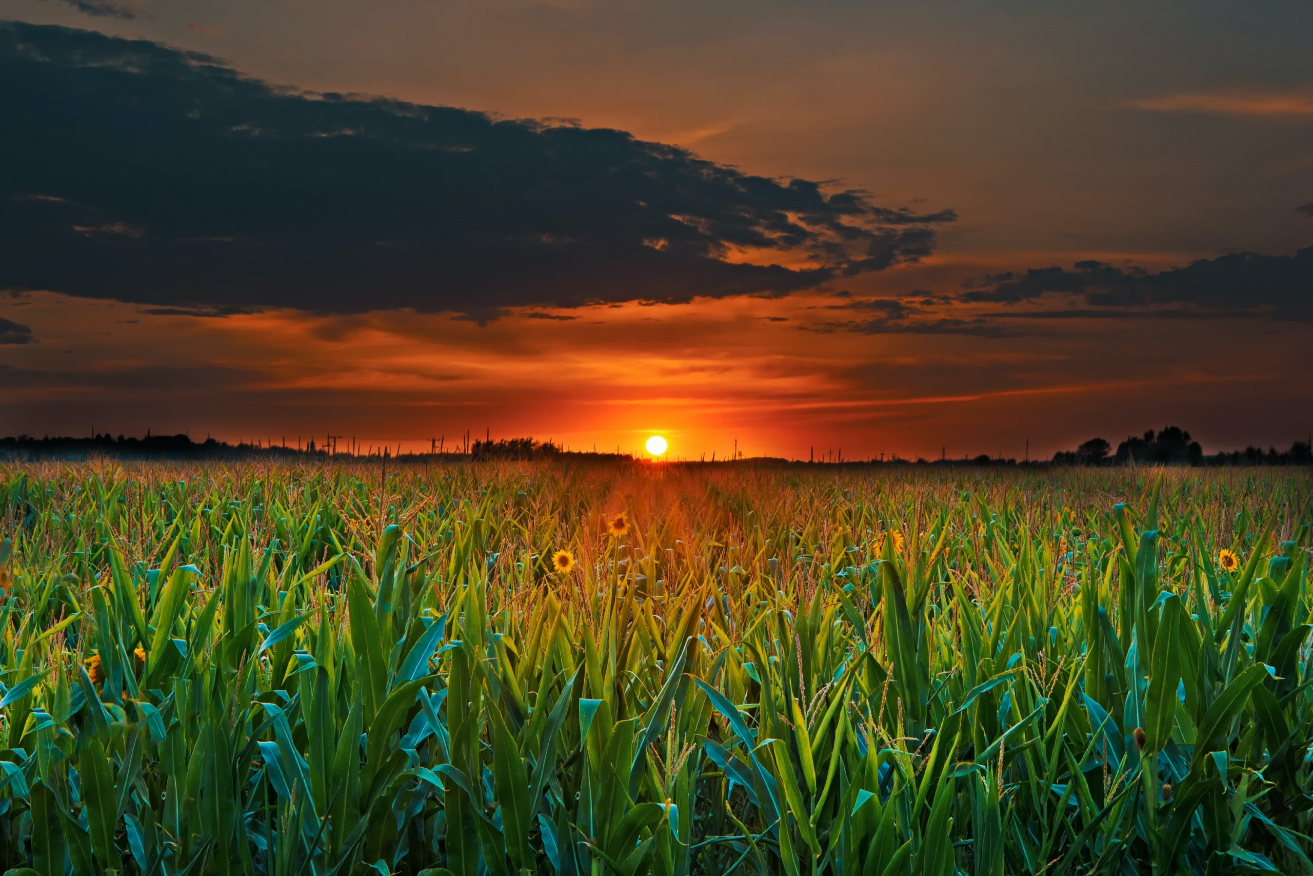 fields and sunset