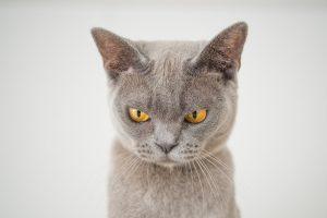 Angry kitten staring