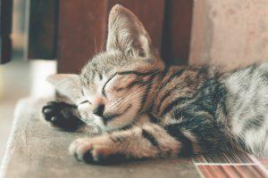 sleeping cat on floor - CollegeMarker